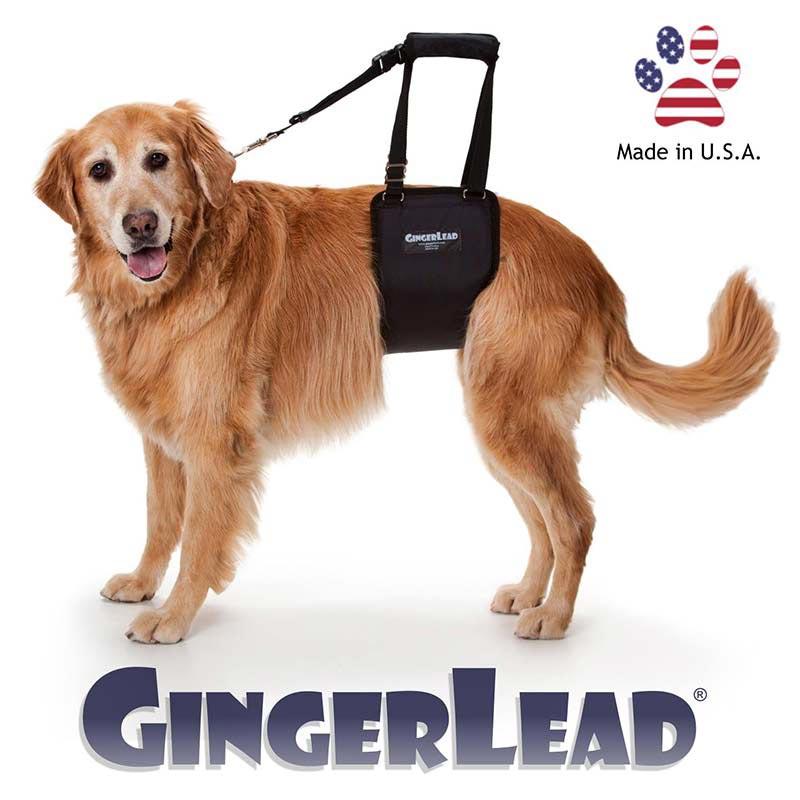 GingerLead