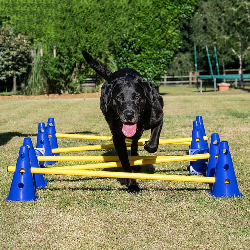 Canine Rehabilitation Poles Cavaletti